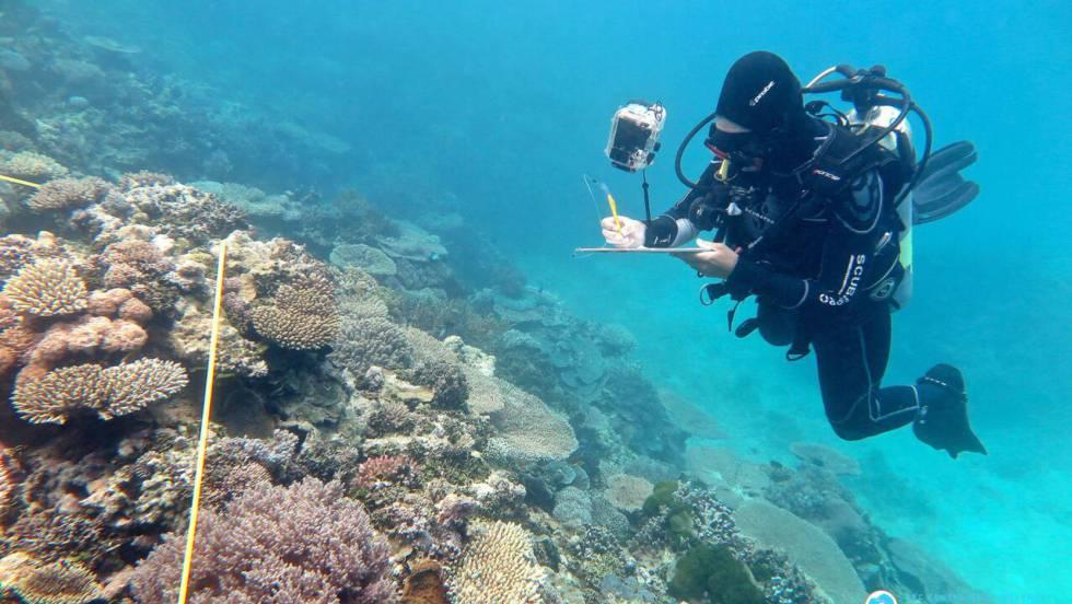 La Gran Barrera de Coral australiana sufre este año su peor deterioro